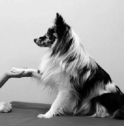 Akupunktio-koirille-Koirien-hyvinvointikeskus