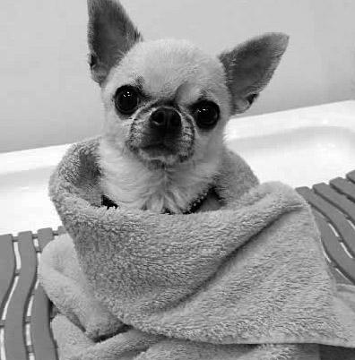 Koiran- esiterapia Korien hyvinvointikeskus