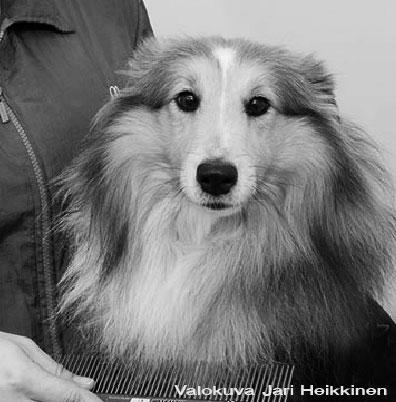 Trimmaus koirille Koirien-hyvinvointikeskus