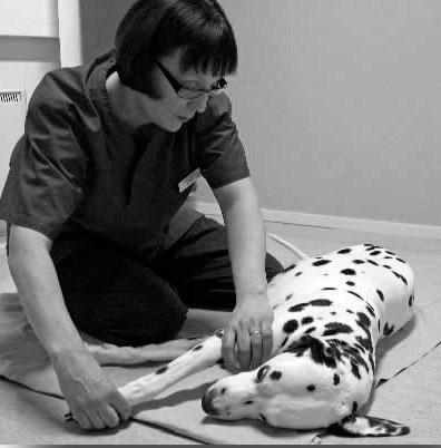 Koiran vesiterapia Korien hyvinvointikeskus